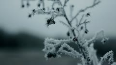 Wintry sprig with berries in countryside with hoar frost, Pacific Northwest - stock footage