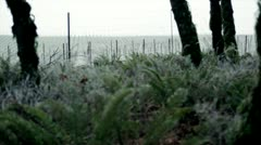 Wintry ferns and vineyard with hoar frost, Pacific Northwest Stock Footage