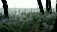 Stock Video Footage of Wintry ferns and vineyard with hoar frost, Pacific Northwest