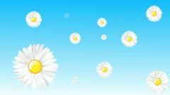Daisy Wallpaper Stock Footage
