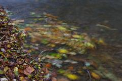 Flowing Leaves Stock Photos