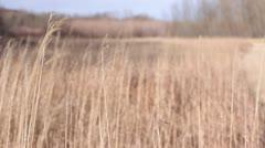 Wind Blowing Through Wild Winter Grasses Stock Footage