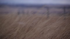 Wild Winter Grasses Blowing In Wind Stock Footage