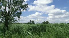 Dutch reed land, cumulus clouds, windmill in distance. Stock Footage