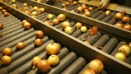 Onion - food processing industry Stock Footage