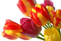 Bouquet of beautiful colorful tulips Stock Photos
