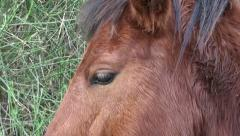 Horse head and eye Stock Footage