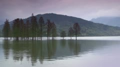 Trees in the lake Stock Footage