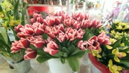 DOLLY: Flower Shop Interior Stock Footage