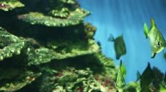 Underwater world - stock footage