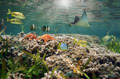 Vibrant sea life and coral reef Stock Photos