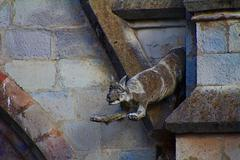 fox gargoyle of the basilica of the national vow. - stock photo