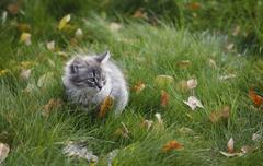 Hairy kitten and grass Stock Photos