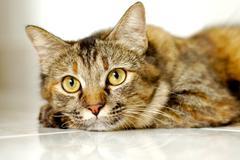 Cat light brown - stock photo