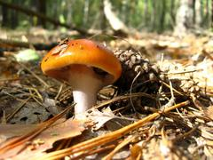 Beautiful young agaric in the forest Stock Photos
