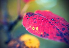 Bright autumn leaf Stock Photos