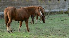Horses on A Farm Stock Footage