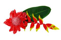 Red flower of etlingera elatior Stock Photos