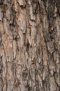 Vanha puu Kuvituskuvat