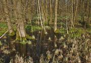 Bog at evening time Stock Photos