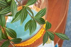 the branch hang-downing houseplant - stock photo