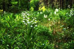 white beauty flower in forest - stock photo