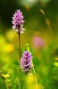 proud flower couple in summer meadow - stock photo