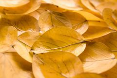 background of autumnal leafage - stock photo