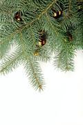 green twig of fir-tree with christmas yellow balls - stock photo