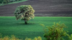 Lonely spring tree on the field Stock Footage