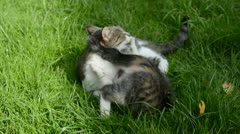 Two cats playing on garden grass Stock Footage