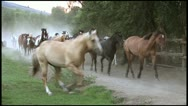 Stock Video Footage of Horse Dusty Run