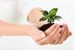 Growing green plant in the female hand Stock Photos