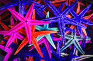 Stock Photo of starfish, seastar