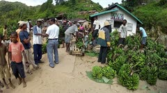 Banana harvest in small village in Madagascar. - stock footage