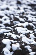 Macro image of white snow on black ground in autumn Stock Photos