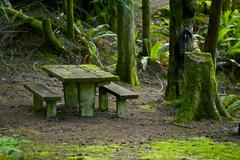 Mossy bench in the mossy forest - stock photo