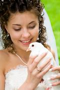 close-up of white dove in hands of pretty bride looking at it - stock photo