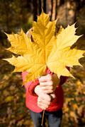 close-up of childish hand with dry maple leaf giving it to you - stock photo