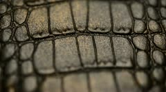 Crocodile skin, macro. Dolly shot Stock Footage