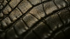 Crocodile skin Stock Footage