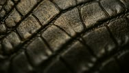 Stock Video Footage of Crocodile skin