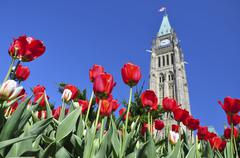 tulip festival in ottawa - stock photo
