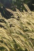 flower grass impact sunlight. - stock photo