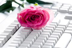 Stock Photo of photo of pink rose bud lying on white computer board