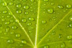 macro image of green leaf with lots of waterdrops on its surface - stock photo