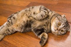 Image of cute grey cat with yellow eyes lying on the floor Stock Photos