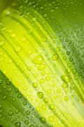 Macro image of fresh leaf surface with pure raindrops on it Stock Photos
