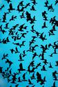 Stock Illustration of set of silhouettes of birds on a blue background
