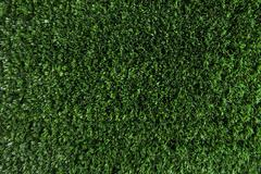 Wallpaper of green fresh grass growing on field or garden Stock Photos